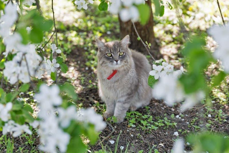 Plan rapproché gris de chat de rue au ressort photos libres de droits