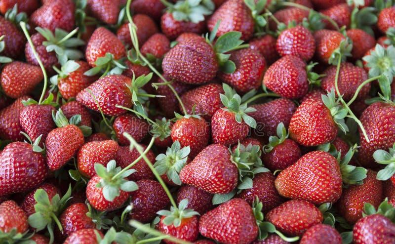 Plan rapproché juteux mûr de fraises Grand fond pour une confiture de label, confiture de baie, jus de fraise, vin de fruits photographie stock