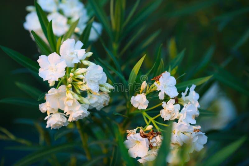 Plan rapproché lumineux de Bush de fleur Macro photos libres de droits