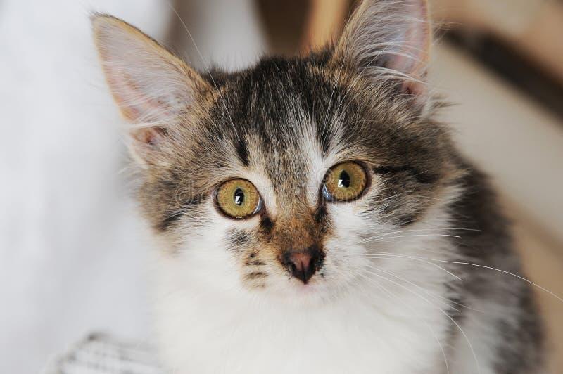 Plan rapproché mignon de chat Couleur de vintage photo libre de droits