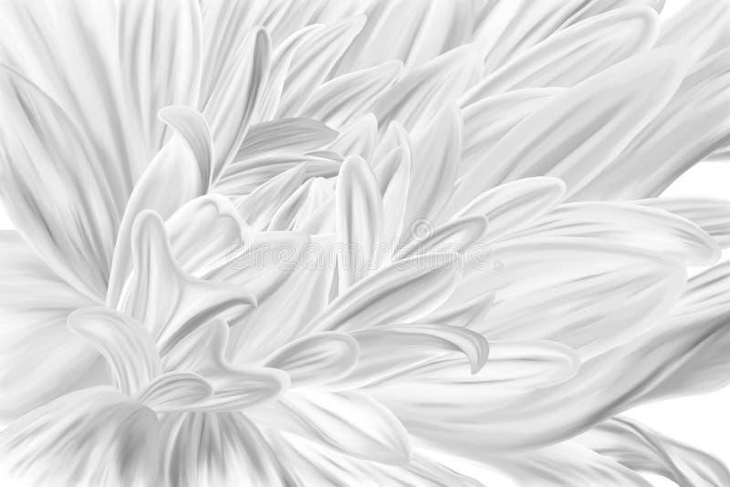 Plan rapproché noir et blanc de fleur de type illustration stock