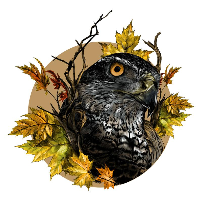Plan rapproché principal de faucon d'oiseau en cercle entouré par les branches et les feuilles sèches d'érable d'automne illustration stock