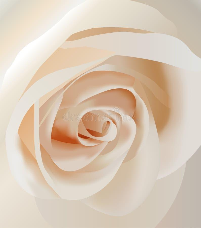 Plan rapproché rose de blanc de vecteur illustration stock