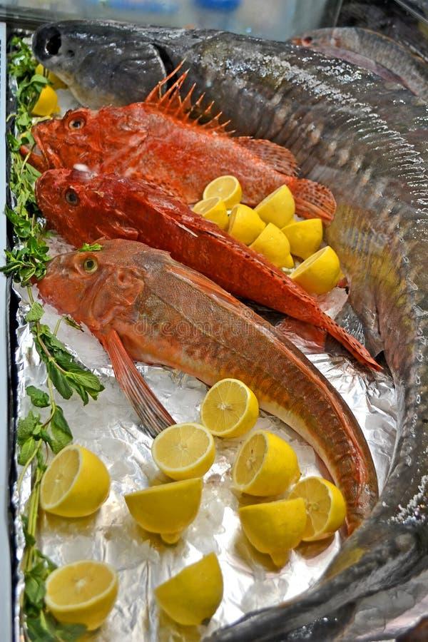 Plan rapproché rouge marin de poissons, diversité d'aliments surgelés, photos libres de droits
