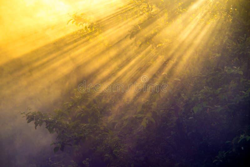 Plan rapproché scénique de nature des arbres au lever de soleil avec la brume images libres de droits