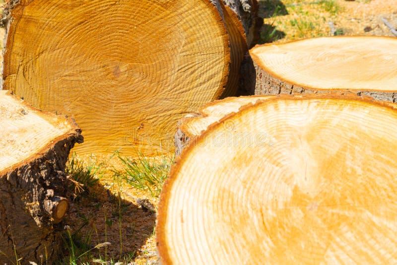 Plan rapproché scié de ronds d'arbre des modèles de cercle d'un arbre coupé montrant la croissance annuelle photos stock