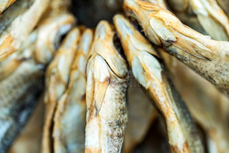 Plan rapproché sec de poissons photo libre de droits