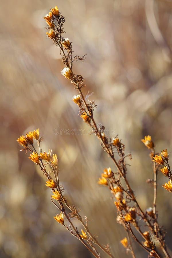Plan rapproché sec naturel de wildflowers photos libres de droits