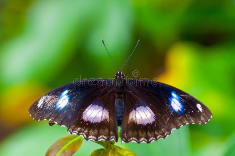Plan rapproché sur butterlfy tropical photographie stock