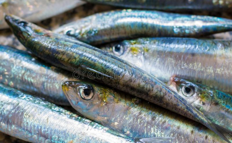 Plan rapproché sur des sardines dans la cuisine photos stock