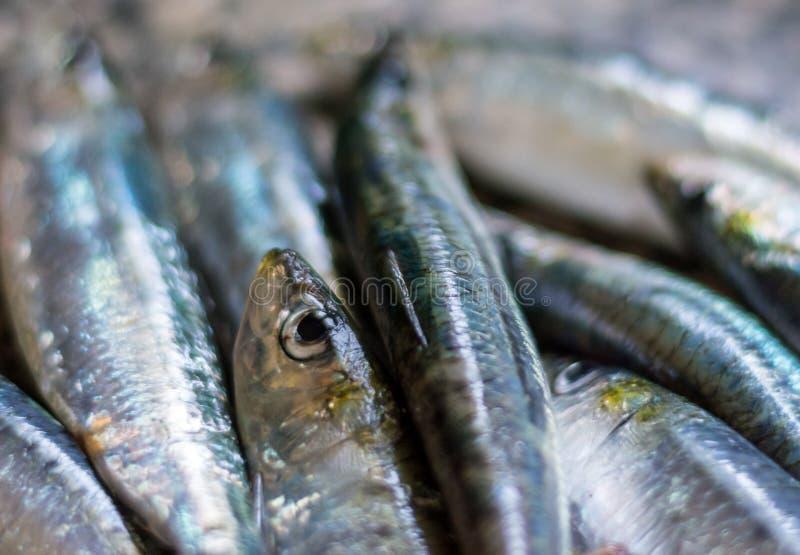 Plan rapproché sur des sardines dans la cuisine image libre de droits