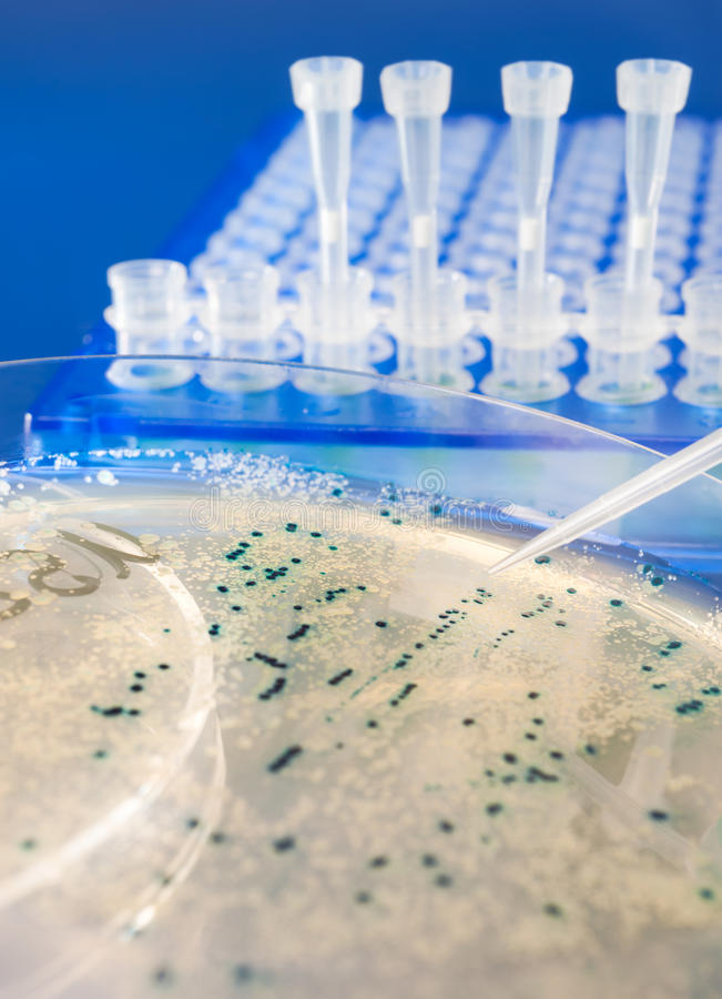 Plan rapproché sur les colonies bactériennes image stock