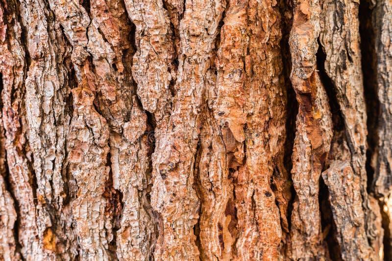 Plan rapproché tiré d'un vieux tronc d'arbre images libres de droits