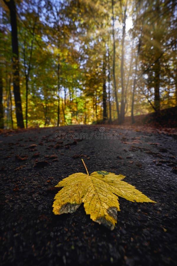 Plan rapproché tiré d'une feuille tombée d'or sur le béton avec une forêt dans une tache floue à l'arrière-plan photo libre de droits