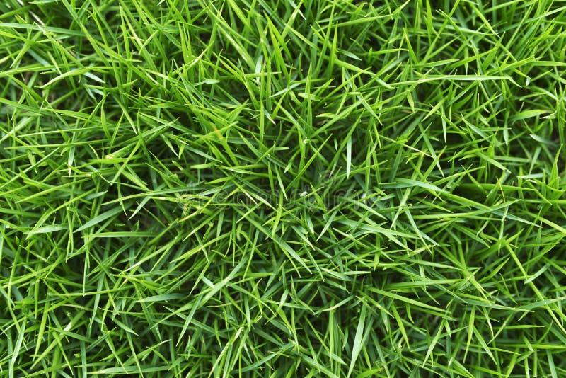 Plan rapproché tiré de l'herbe verte photo stock