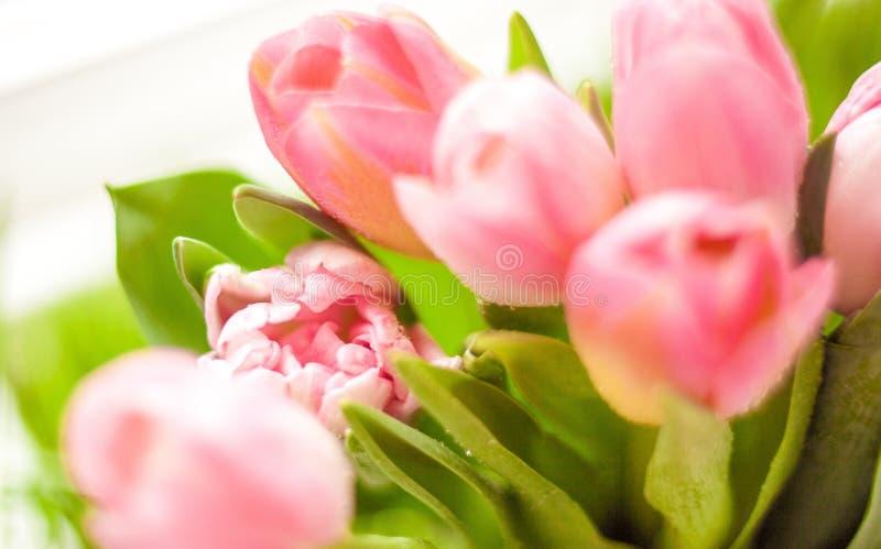 Plan rapproché tiré du groupe de tulipes roses image stock