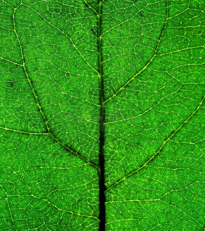 Download Plan Rapproché Vert De Lame Photo stock - Image du sunlight, feuillage: 56484348