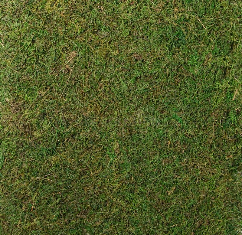 Plan rapproché vert luxuriant de texture de mousse photo libre de droits