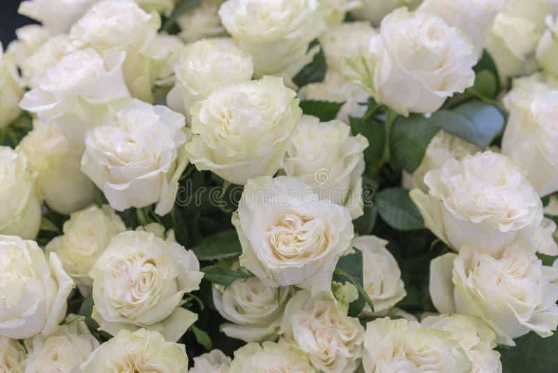 plan rapproch? d'isolement d'un bouquet ?norme des roses blanches Agencement de fleur blanc de roses photographie stock libre de droits
