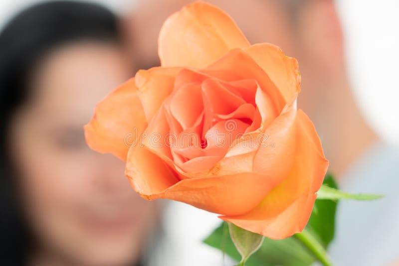Plan rapproch? de Rose orange photos stock