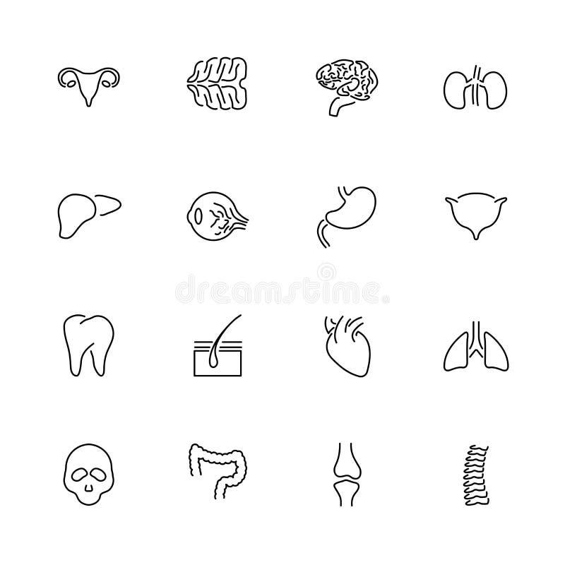 Plan vektorlinje symboler för organ stock illustrationer
