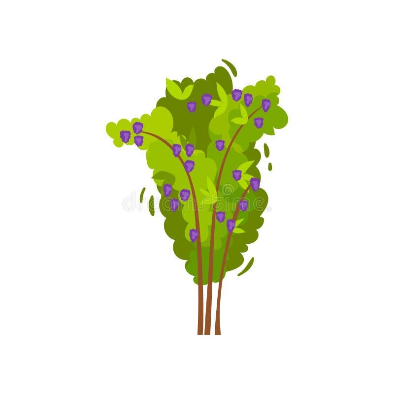 Plan vektorsymbol av björnbärbusken Grön trädgårdbuske med mogna ätliga bär Jordbruks- växt grönsaker för rad för mat för bönamor vektor illustrationer