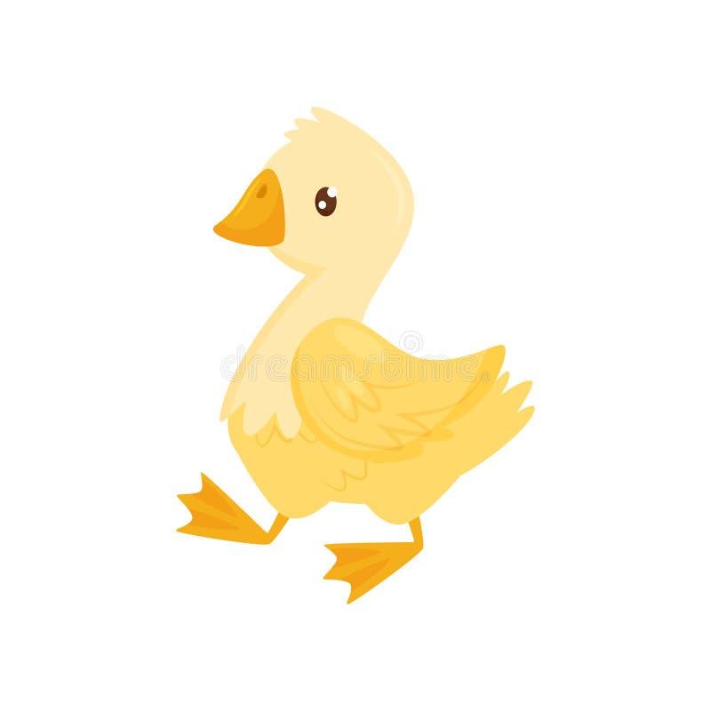 Plan vektorsymbol av den gulliga unga anden Lantgårdfågel med gula fjädrar, den orange näbb och ben Hönslantbruk vektor illustrationer