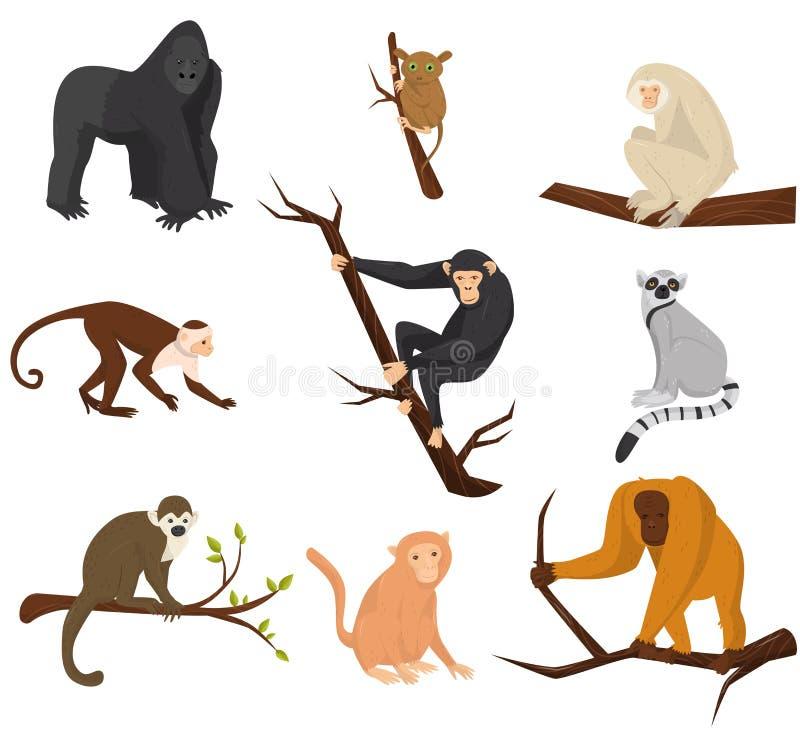 Plan vektoruppsättning av 9 art av apor wild djur Beståndsdelar för promoaffisch eller baner av zoo parkerar Djurlivtema vektor illustrationer