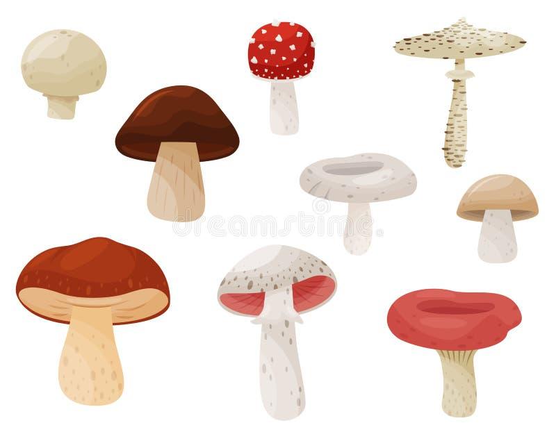 Plan vektoruppsättning av champinjoner Forest Plant Ätliga och giftiga svampar Dekorativ etikett för design Beståndsdelar för bok stock illustrationer