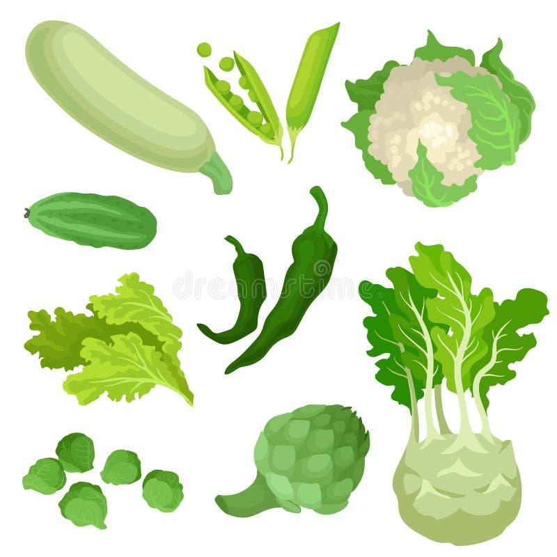 Plan vektoruppsättning av organiska gröna grönsaker Nya och sunda ingredienser för vegetarisk disk Naturliga gårdsprodukter vektor illustrationer