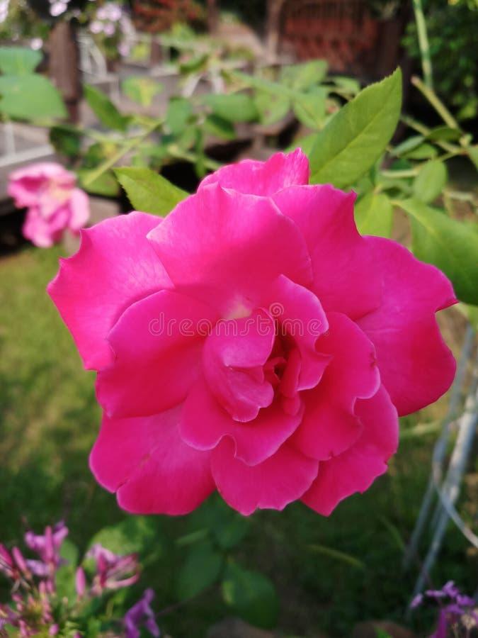 Plan verde de la naturaleza de la flor fotos de archivo libres de regalías