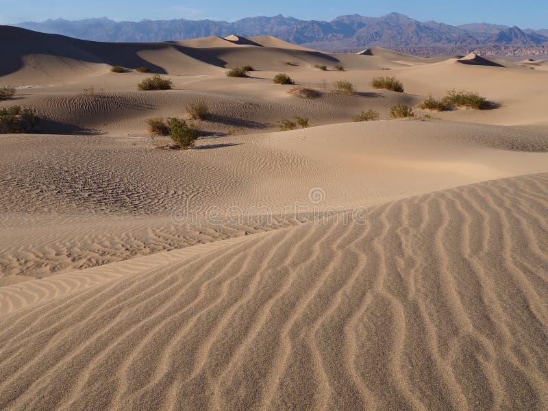 Plana sanddyn för Mesquite, Death Valley, Kalifornien arkivfoto