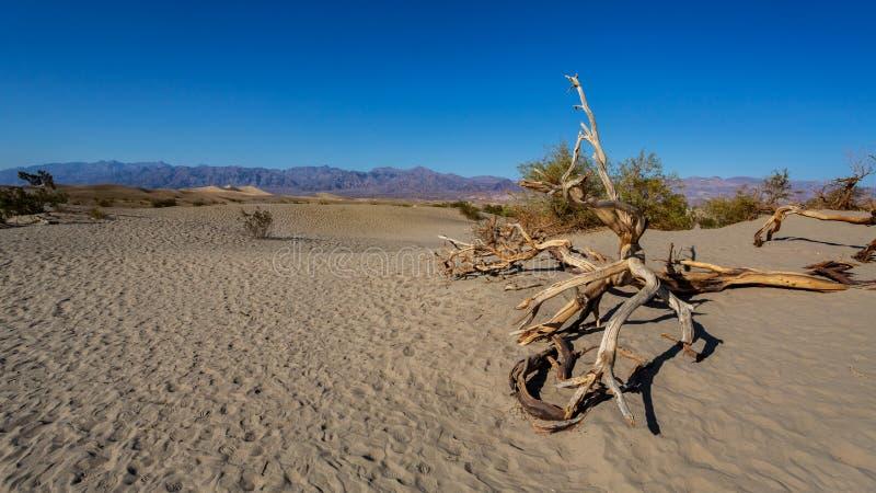 Plana sanddyn för Mesquite i Death Valley arkivfoto