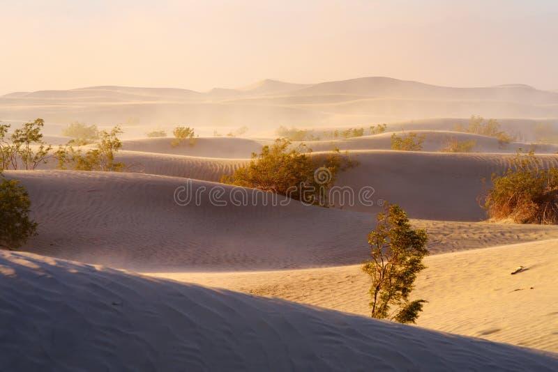 Plana sanddyn för Mesquite under sandstorm, Death Valley nationalpark, Kalifornien royaltyfria foton