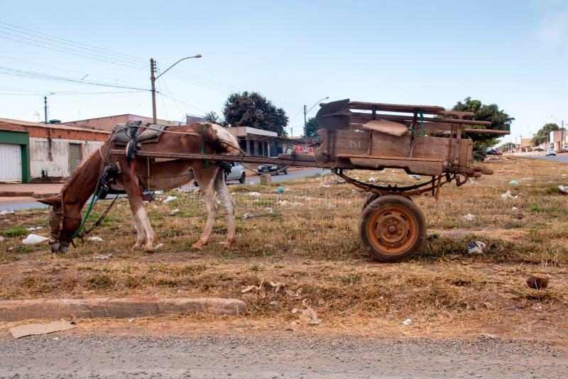 Planaltina, Goias, el Brasil 3 de agosto de 2019: Un caballo que tira de un carro imágenes de archivo libres de regalías