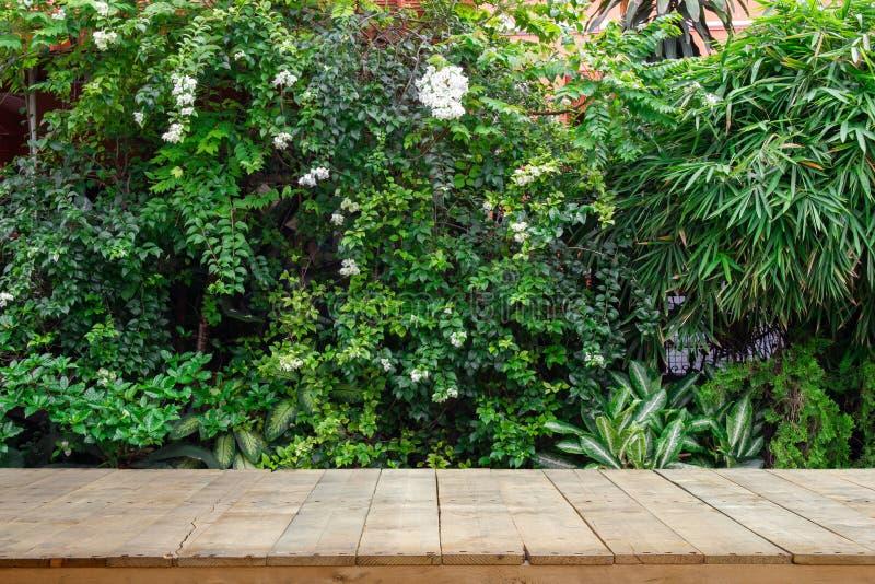 Plance di legno o tavola di legno con le piante ornamentali o l'albero del giardino o dell'edera fotografia stock libera da diritti