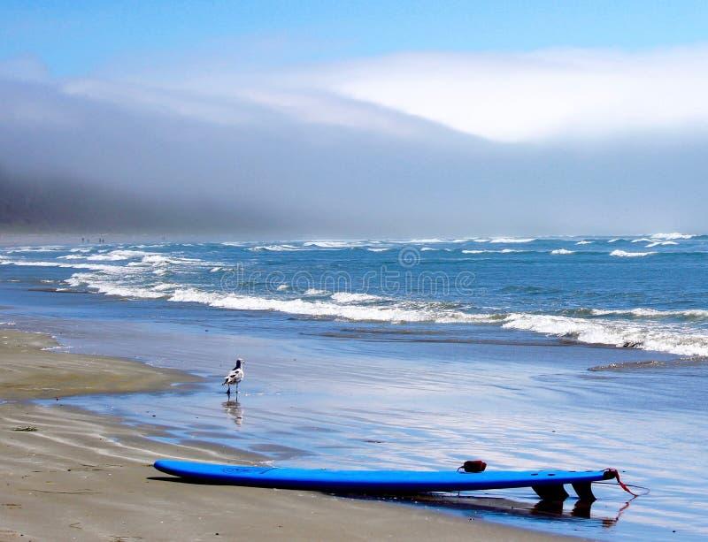 Planche de surf et vagues, avec une mouette, Long Beach photographie stock libre de droits