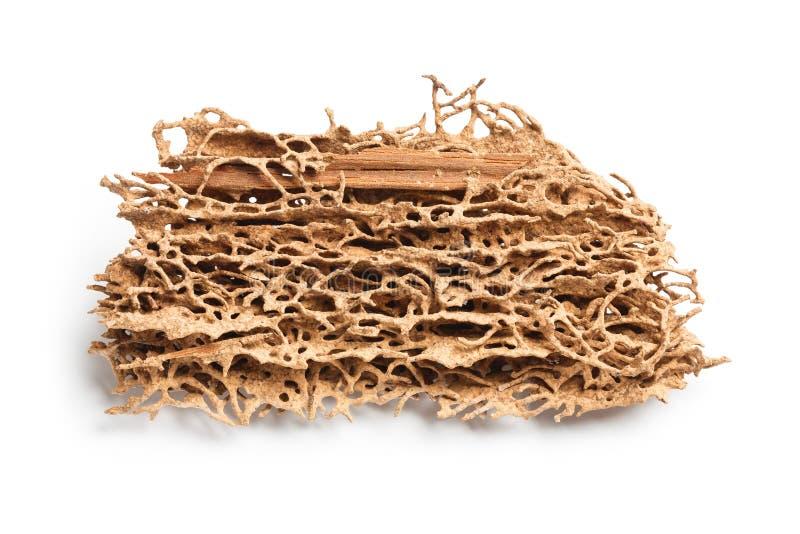 Planche en bois mangée par le termite image stock