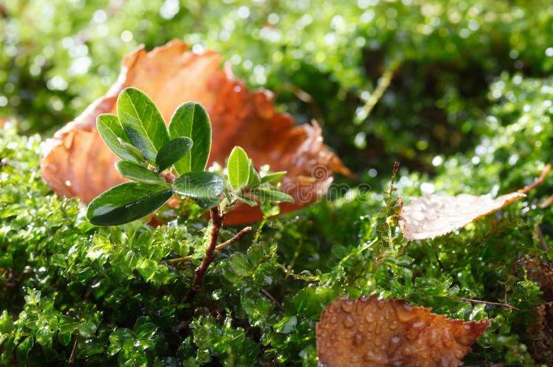 Plancher de forêt après pluie de chute image libre de droits