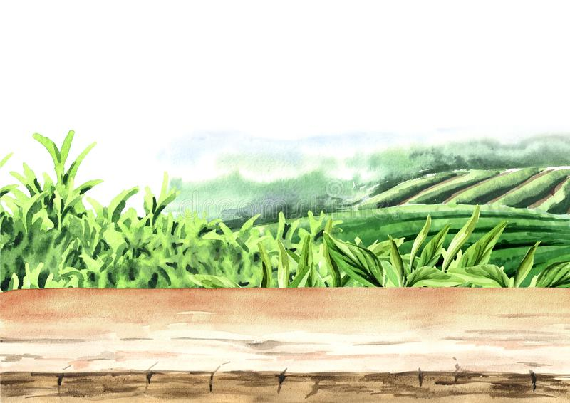 Plancher en bois sur la plantation de thé Fond tiré par la main d'aquarelle illustration libre de droits