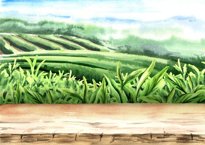 Plancher en bois sur la plantation de thé Illustration tirée par la main d'aquarelle Fond de thé illustration libre de droits