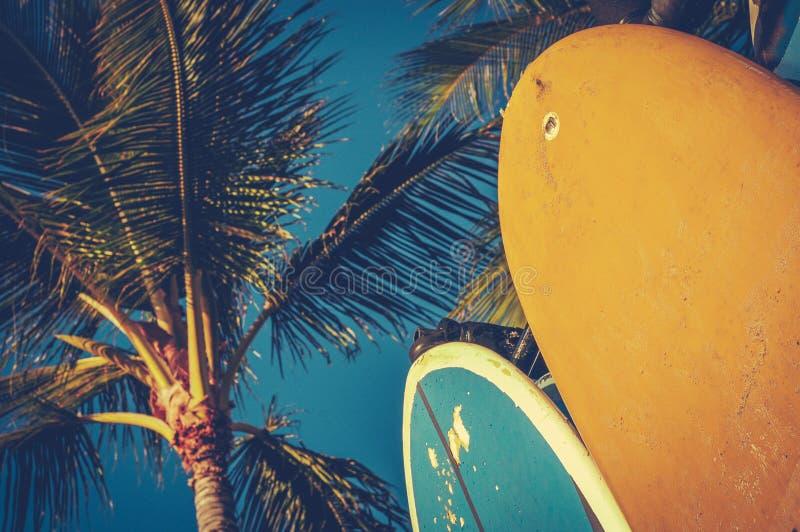 Planches de surf et paumes de vintage photos stock