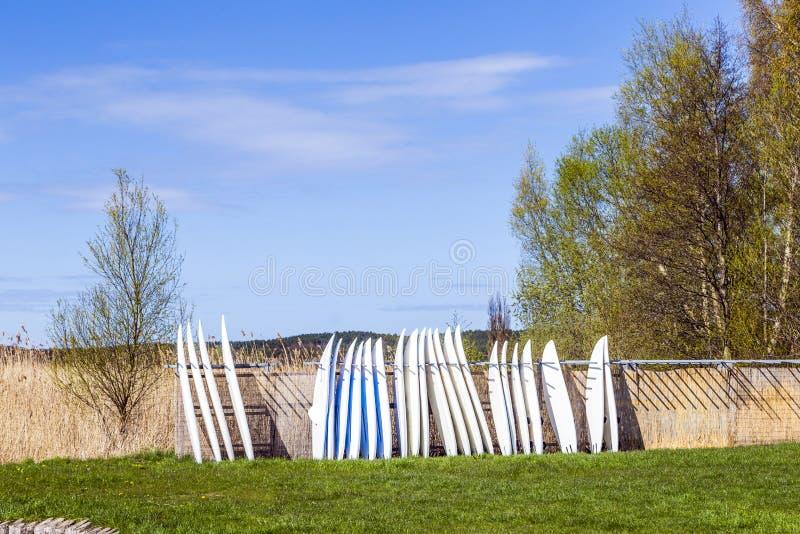 Planches de surf se tenant dans une rangée photo stock