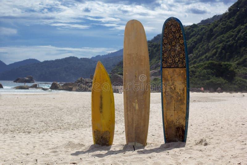 Planches de surf se tenant droites en soleil lumineux sur la plage, Brésil image libre de droits