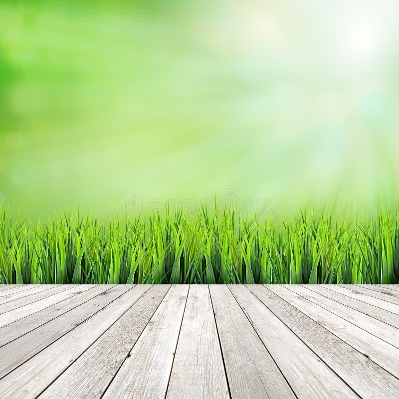 Plancia di legno su fondo astratto naturale verde immagine stock