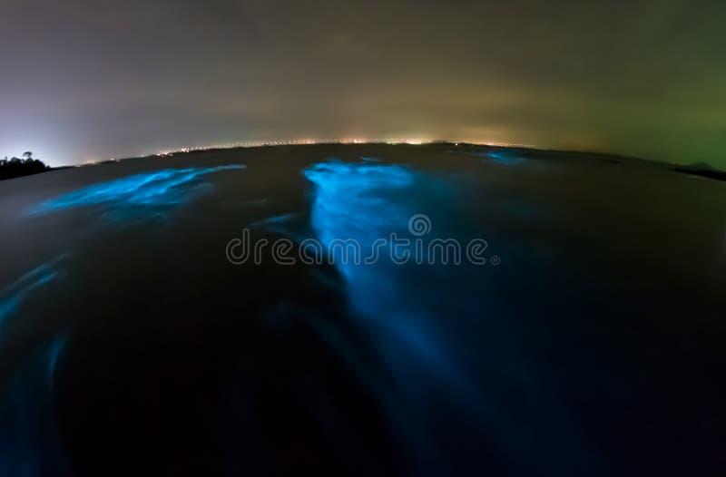 Plancton bioluminescent image stock