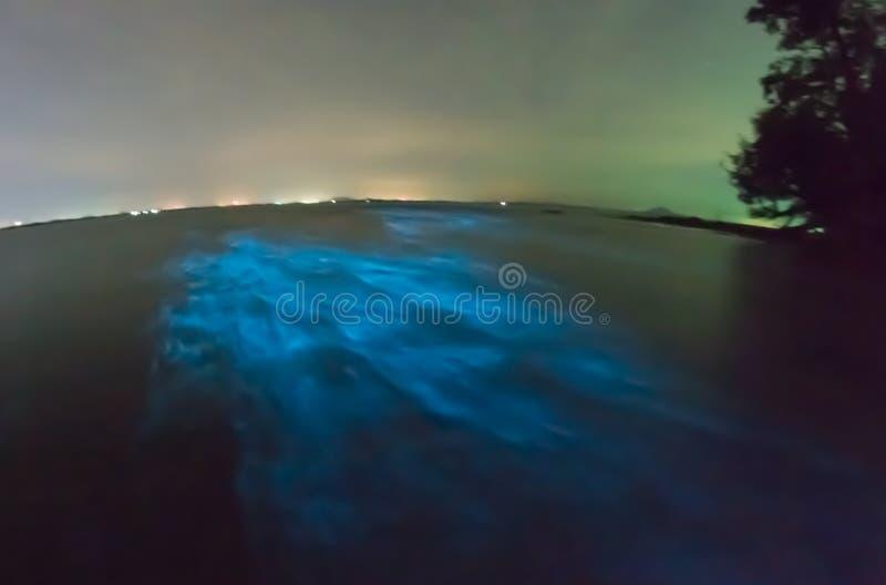 Plancton bioluminescent rougeoyant image stock