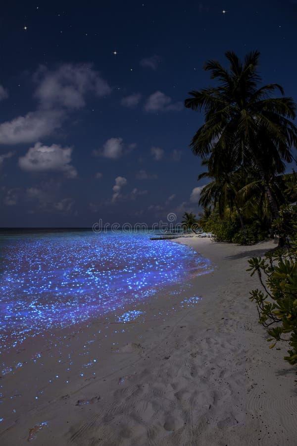Plancton fluorescent en Maldives - l'Océan Indien photographie stock libre de droits