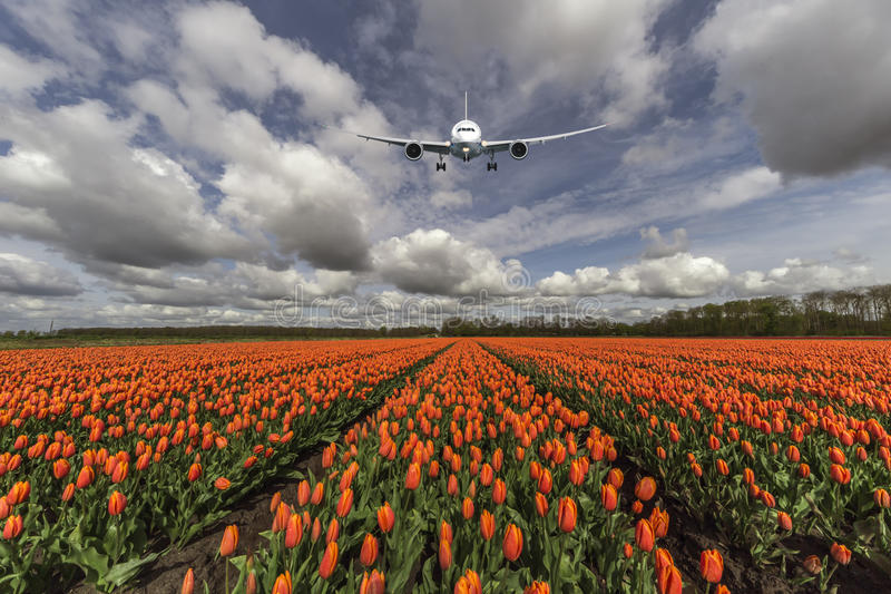 A plane flying on an orange tulip bulb farm stock photos