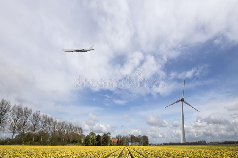 A plane flying on an yellow tulip bulb farm royalty free stock image
